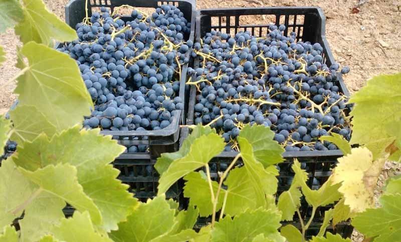 Ruta del vino DO Empordà
